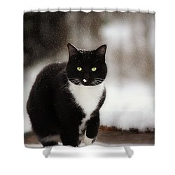 Kitty Snow Play Shower Curtain by Melanie Lankford Photography