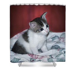 Kitty Taking A Moment To Chill Shower Curtain by Thomas Woolworth
