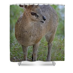 Klipspringer Shower Curtain by Richard Bryce and Family