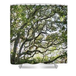 Knarly Oak Shower Curtain