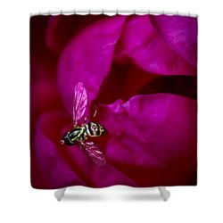 Knockout Rose Investigation Shower Curtain