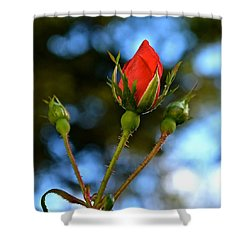 Knockout Rosebud Shower Curtain