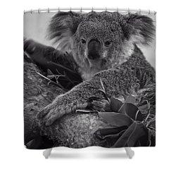 Koala Shower Curtain by Chris Flees