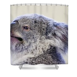 Koala Close Up Shower Curtain by Chris Flees