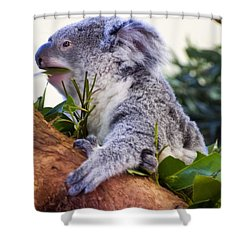 Koala Eating In A Tree Shower Curtain by Chris Flees