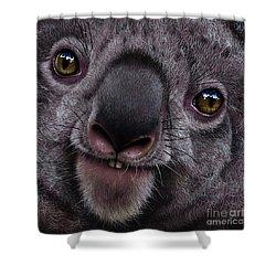 Koala Shower Curtain by Jurek Zamoyski