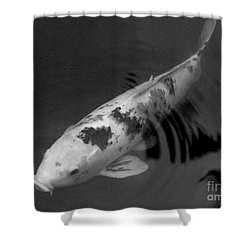 Koi In Black And White Shower Curtain by Mary Deal