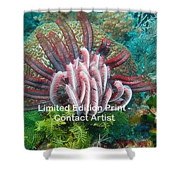 Komodo Island 6 Shower Curtain