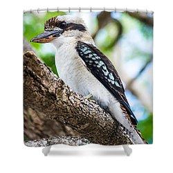 Kookaburra  Shower Curtain