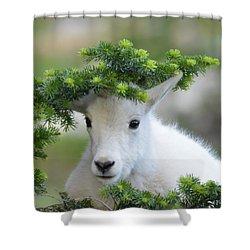 Kurious Kid Shower Curtain