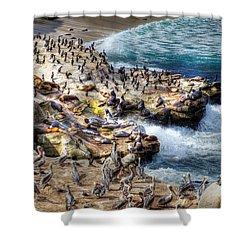 La Jolla Cove Wildlife Shower Curtain