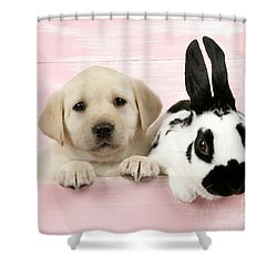 Lab Puppy And Bunny Shower Curtain by John Daniels