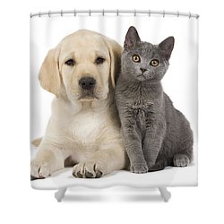 Labrador Puppy With Chartreux Kitten Shower Curtain by Jean-Michel Labat