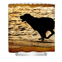 Shower Curtain featuring the photograph Labrador Silhouette by Eleanor Abramson
