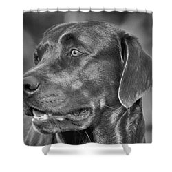 Labrador Sweetie Shower Curtain