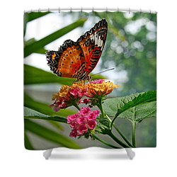 Lacewing Butterfly Shower Curtain by Karen Adams