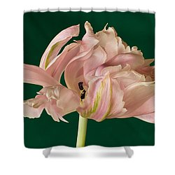 Lacey Tulip Shower Curtain