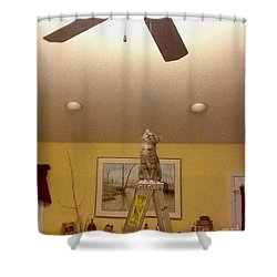 Ladder Cat Shower Curtain by Stacy C Bottoms