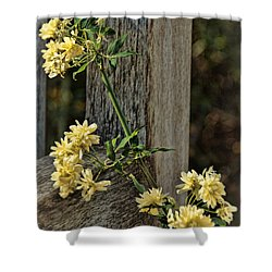 Shower Curtain featuring the photograph Lady Banks Rose by Peggy Hughes