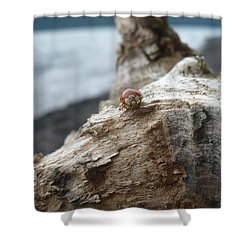 Lady Bug A Drift Shower Curtain by Nicki Bennett
