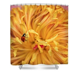 Lady Bug Shower Curtain by Darren Fisher