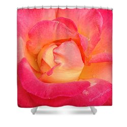 Lady Diana Rose, A #macro #rose For The Shower Curtain by Anna Porter