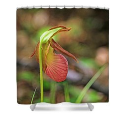Lady Slippers At Moore State Park 4 Shower Curtain
