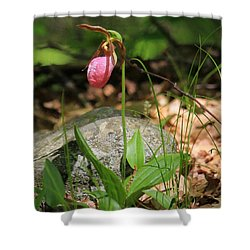 Lady Slippers At Moore State Park 3 Shower Curtain
