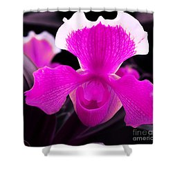 Lady Slippers Shower Curtain by Kathleen Struckle