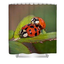 Ladybird Coupling Shower Curtain