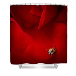 Shower Curtain featuring the photograph Ladybird In Rose by Peta Thames
