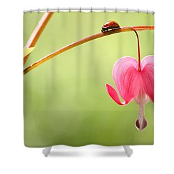 Ladybug And Bleeding Heart Flower Shower Curtain by Peggy Collins