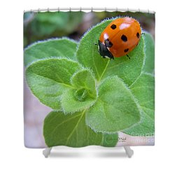 Shower Curtain featuring the photograph Ladybug And Oregano by Robert ONeil