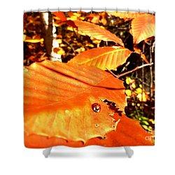 Ladybug At Fall Shower Curtain