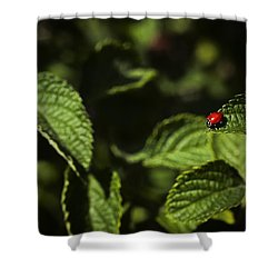 Shower Curtain featuring the photograph Ladybug by Bradley R Youngberg