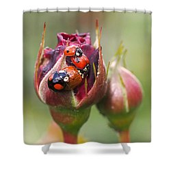 Ladybug Foursome Shower Curtain