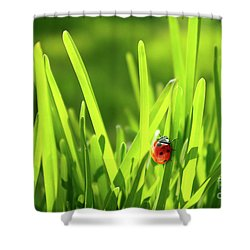 Ladybug In Grass Shower Curtain by Carlos Caetano