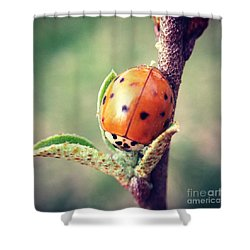 Shower Curtain featuring the photograph Ladybug  by Kerri Farley