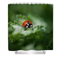 Ladybug On The Move Shower Curtain by Jordan Blackstone