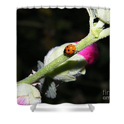 Shower Curtain featuring the photograph Ladybug Taking An Evening Stroll by Ann E Robson
