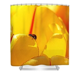 Ladybug - The Journey Shower Curtain