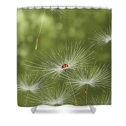 Ladybug Shower Curtain
