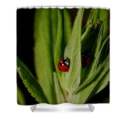 Ladybugs Shower Curtain by Adria Trail