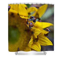 Ladybugs Close Up Shower Curtain by Garry Gay