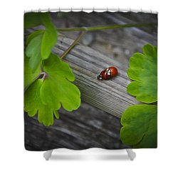 Ladybugs Mating Shower Curtain by Aged Pixel