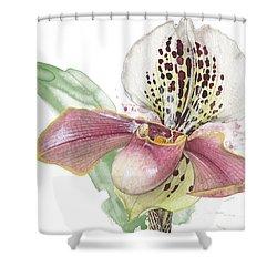 Ladys Slipper - Orchid 14 - Elena Yakubovich Shower Curtain