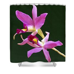 Laelia Anceps Shower Curtain