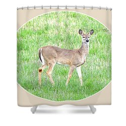 Lake Country Doe   Shower Curtain by Will Borden