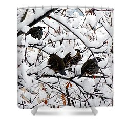 Lake Country Quail Shower Curtain by Will Borden