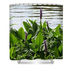 Lake Day Shower Curtain by Andrea Anderegg